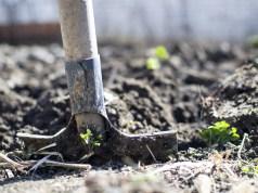 Les semences libérées par la loi… Ne le sont plus !