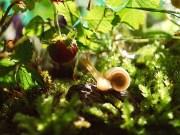 les fruits uniques du jardin à la terrasse, faciles à cultiver