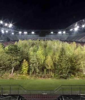 une forêt dans un stade