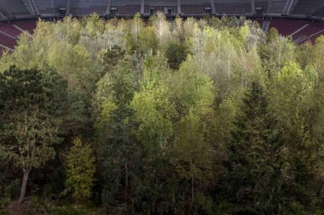 les arbres de la foret