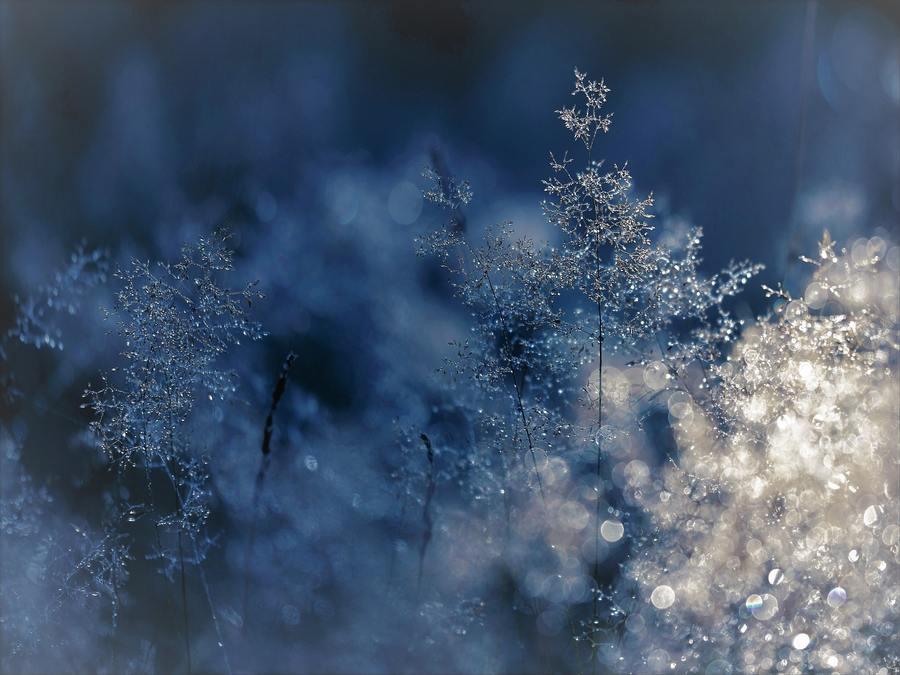Why I Celebrate Christmas - Snow