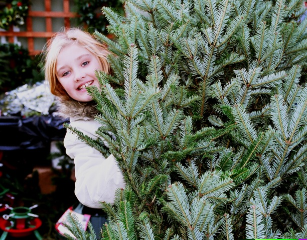 Ethical Christmas Trees from The Christmas Forest