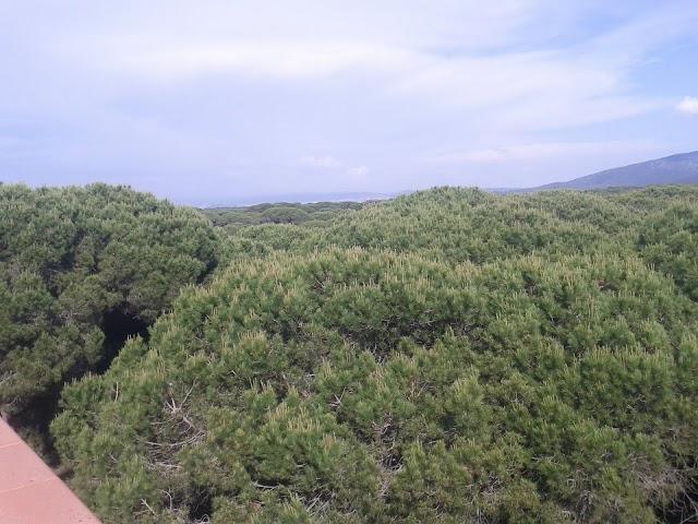 pini del mareblu
