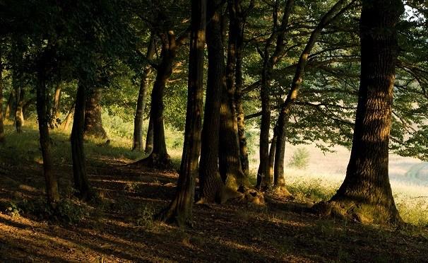 Dalla Calabria al Trentino, 8 boschi e foreste incantevoli in cui perdersi con i bambini