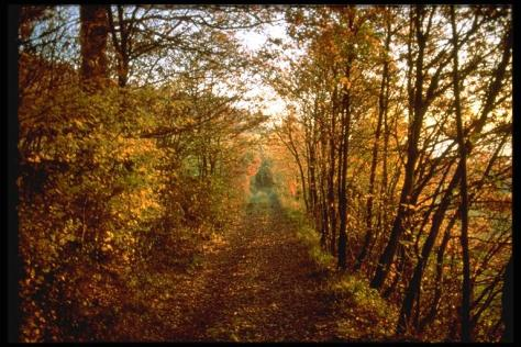 8 boschi incantati in cui perdersi. Emilia Romagna, Bosco di Carrega.