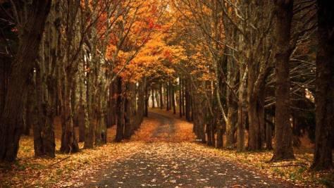 foliage bambini foresta umbra puglia