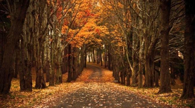 Foliage con i bambini, la magia dell'autunno si tinge di mille colori