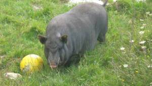 Agriturismo Podere Morgana,gioco con gli animali