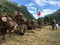 family hotel montagna piemonte mirtillo rosso escursioni