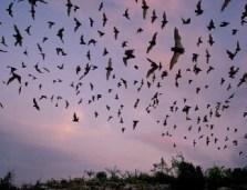 Trasimeno-escursione-per-conoscere-i-pipistrelli