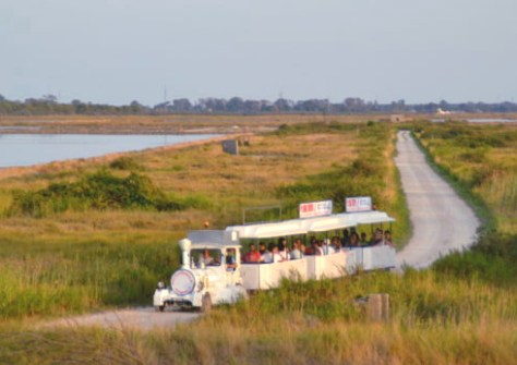Delta del Po-trenino-in-salina