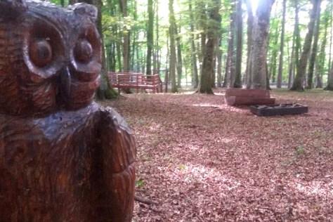 Gargano-Giocabosco alla Foresta Umbra