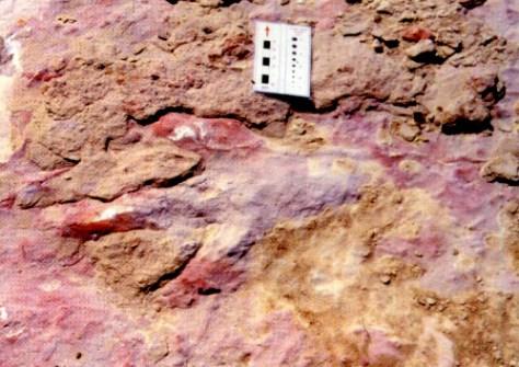 Gargano-impronte di Dinosauro
