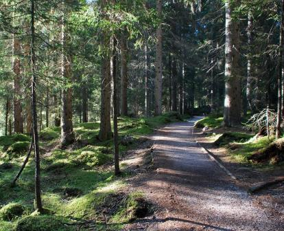 parco_paneveggio_foresta_abeti_rossi