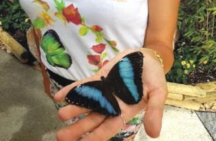 Butterfly house Sardegna3