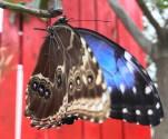Casa Farfalle Roma1
