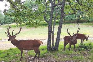 parco-faunistico-ranco-spinoso-cervi