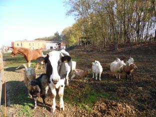 vecchie_fattorie_emilia_antica_ruggine_animali