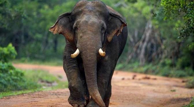 Tra elefanti, templi e tartarughe giganti. Viaggio in Sri Lanka per bambini (anche piccoli)