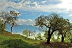 Uliveti Garda