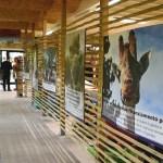 Marche-Zoo Falconara-mostre