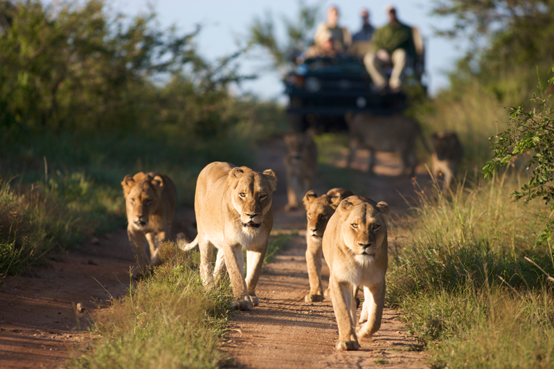 sudafrica bambini viaggio di gruppo per famiglie