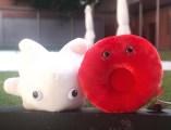 MUSME-Museo della Medicina- shop-globuli bianchi e globuli rossi