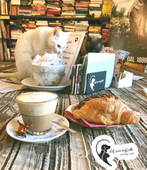 Neko-cafe-Di-Cane-in-Gatto-Cat-Cafe-1