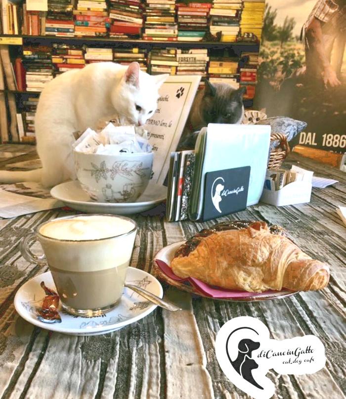 Neko-cafe-Di-Cane-in-Gatto-Cat-Cafe-1