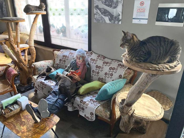 Neko-cafe-Di-Cane-in-Gatto-Cat-Cafe-3