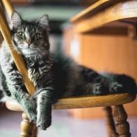 A pranzo con i gatti nei Neko cafè! I 7 bar bistrot con i mici che ci fanno impazzire!