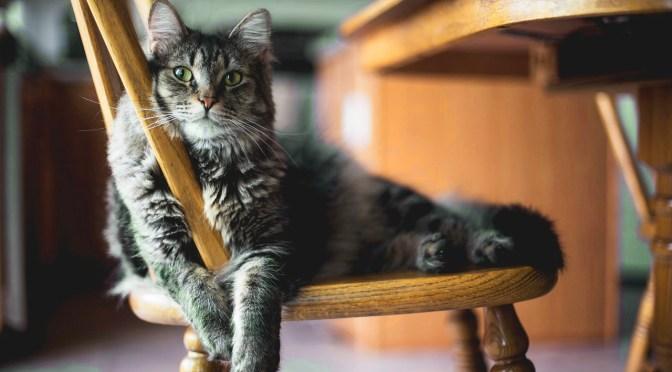 A pranzo con i gatti nei Neko cafè! 8 bar bistrot con i mici che ci fanno impazzire!