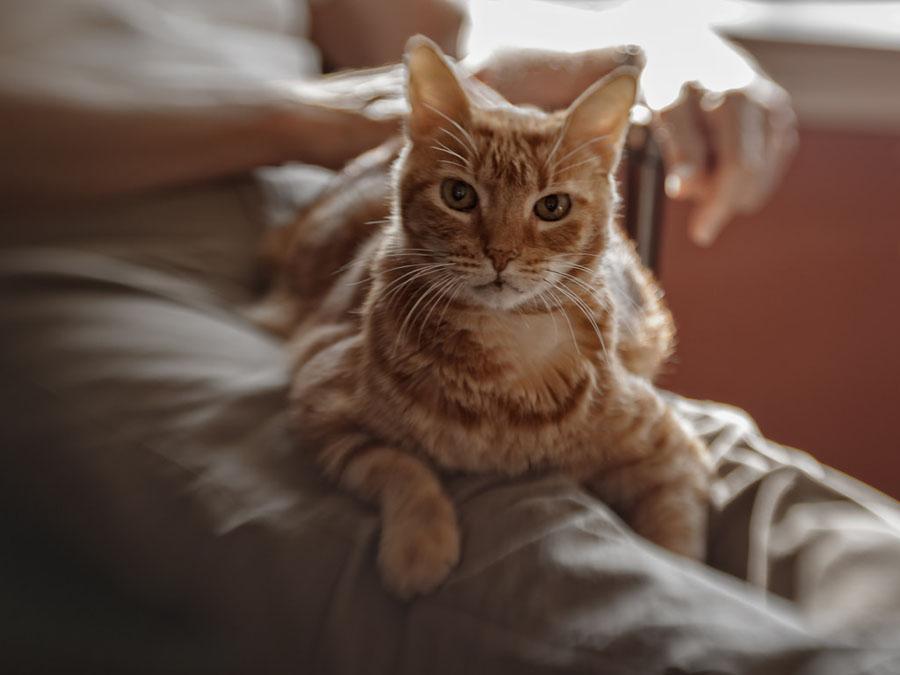 Почему кошки делают массаж