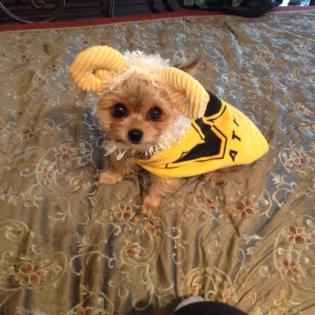 Sally Farrar's dog official won Halloween. Try to top this.