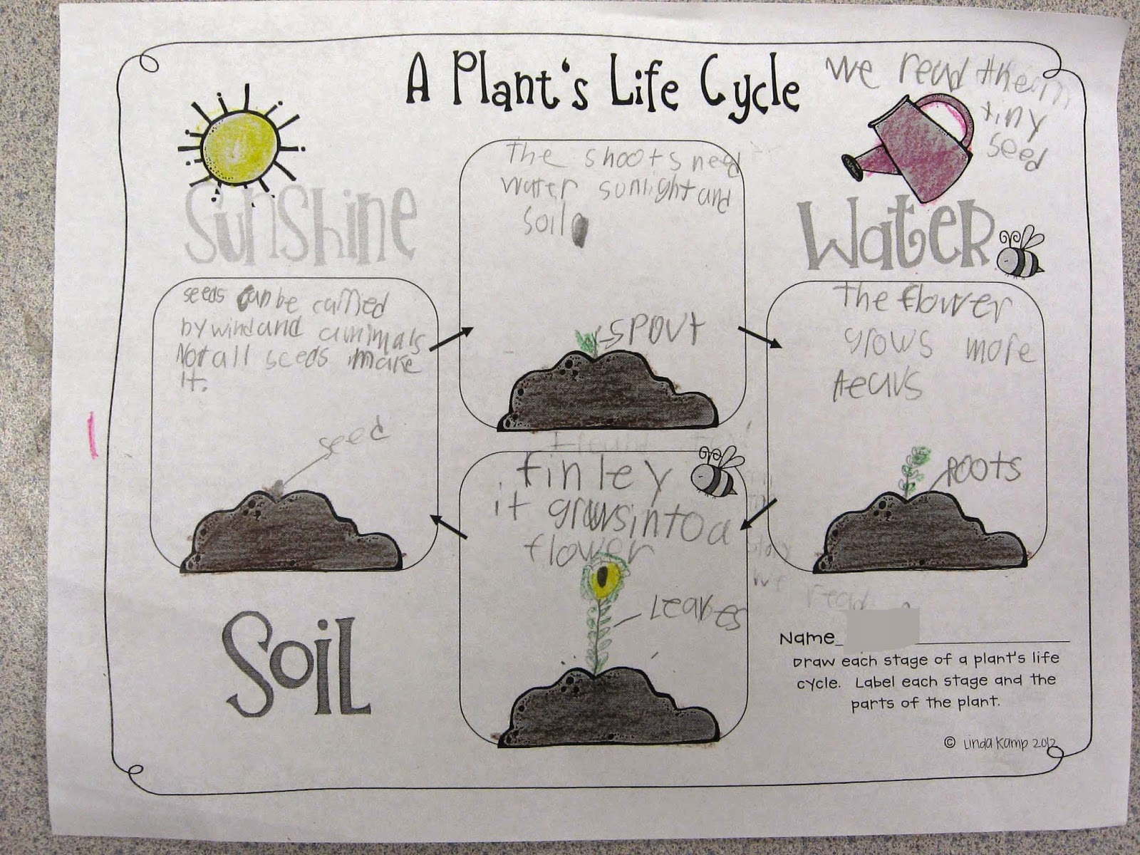 Worksheets Plant Life Cycle Worksheet Waytoohuman Free