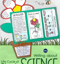 Plant Life Cycle Activities: Writing About Science \u0026 A Freebie - Around the  Kampfire [ 1024 x 791 Pixel ]