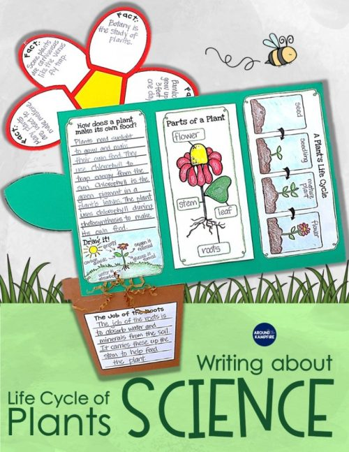 small resolution of Plant Life Cycle Activities: Writing About Science \u0026 A Freebie - Around the  Kampfire
