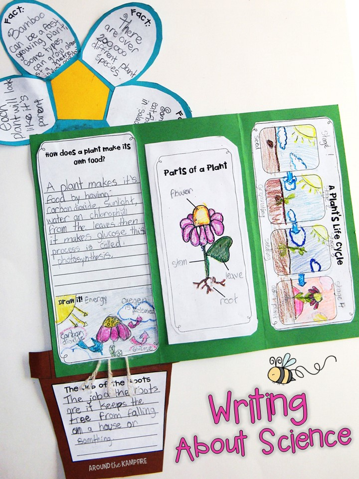 Plant Life Cycle Activities Foldable Flower Lapbook