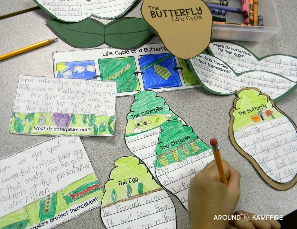 parts of a butterfly diagram off road light wiring without relay life cycle resources and free printables around