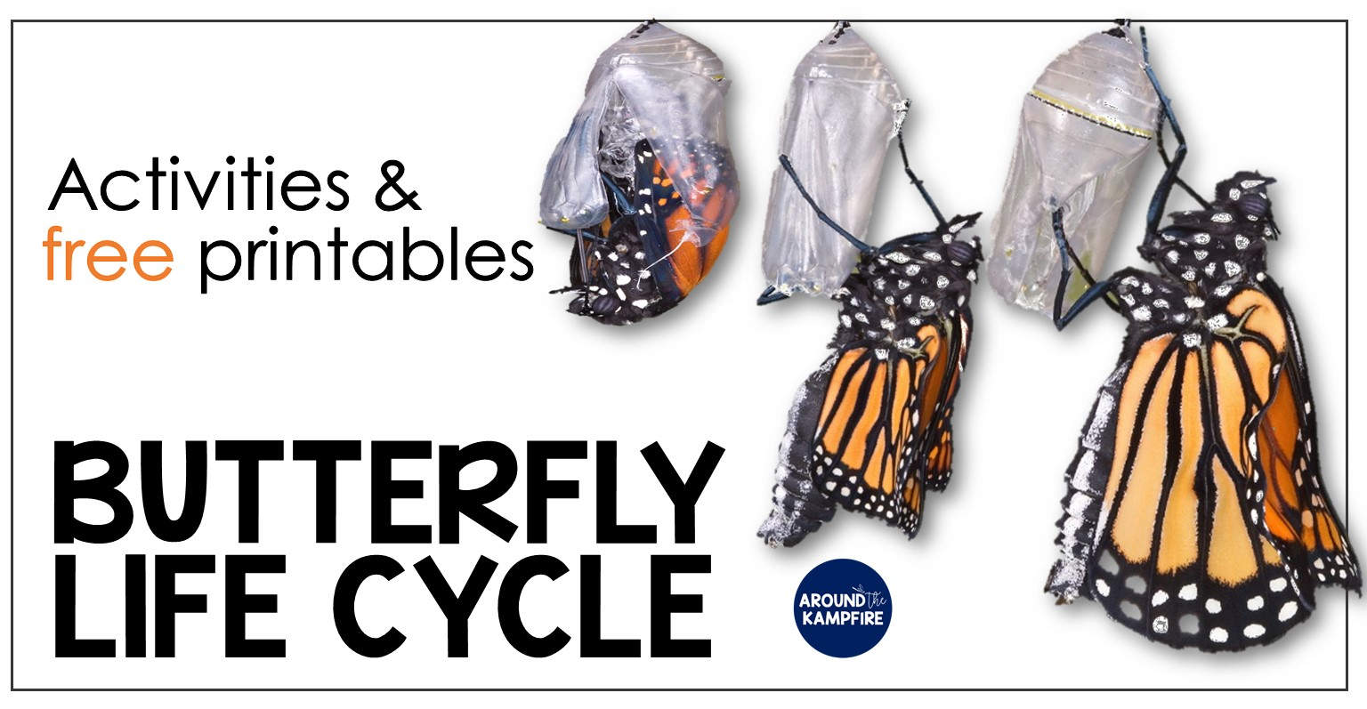 hight resolution of Butterfly Life Cycle Resources \u0026 Free Printables - Around the Kampfire