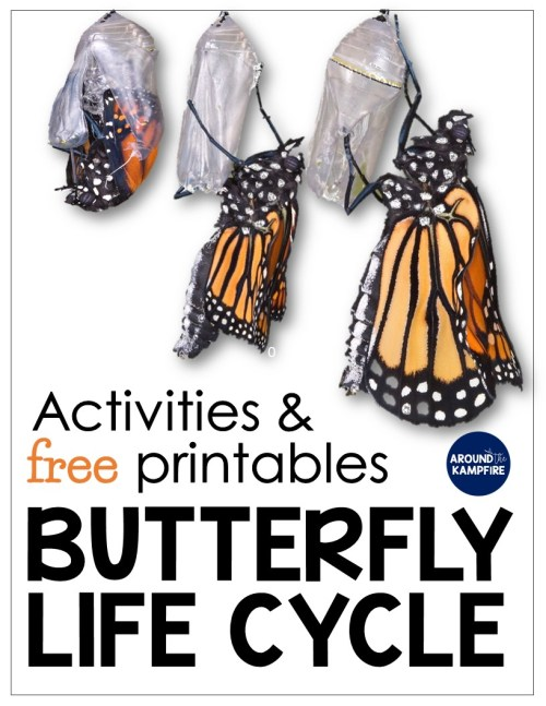 small resolution of Butterfly Life Cycle Resources \u0026 Free Printables - Around the Kampfire