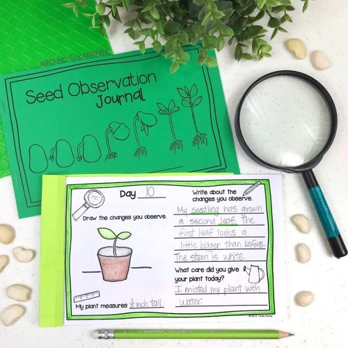small resolution of Plant Life Cycle Activities-Fun