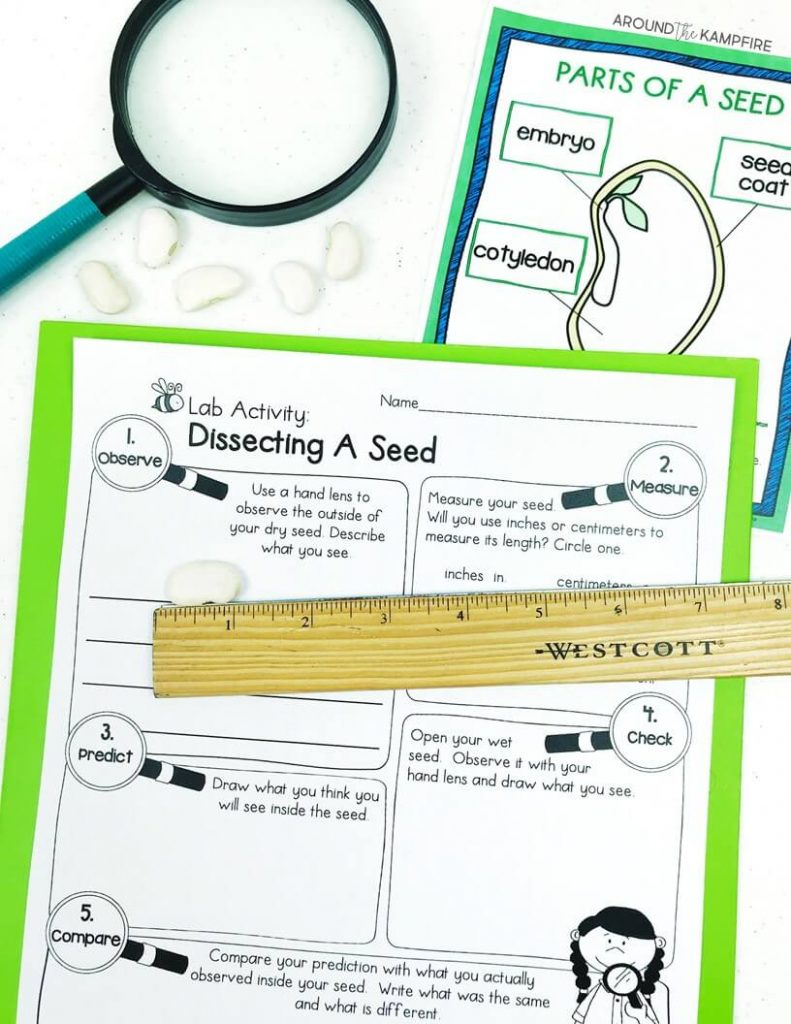 hight resolution of Easy Seed Science Experiments \u0026 Parts of a Seed Activities - Around the  Kampfire