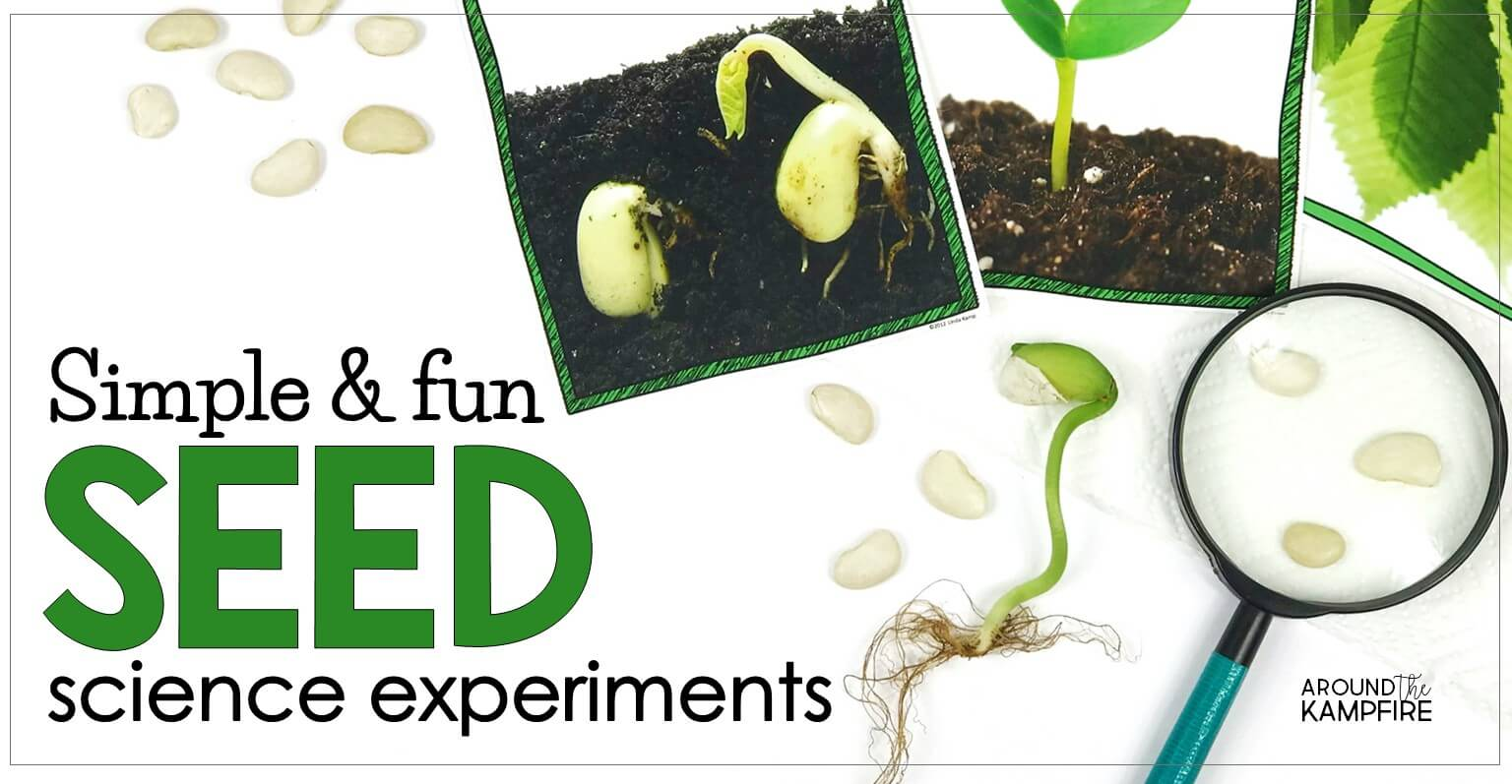 Easy Seed Science Experiments Amp Parts Of A Seed Activities