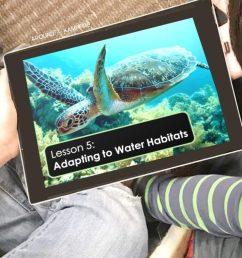 Hands-on Habitats Activities for Second Grade Scientists - Around the  Kampfire [ 791 x 1024 Pixel ]