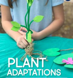 Plant STEM Activities for Kids: Making Models of Adaptations - Around the  Kampfire [ 1056 x 816 Pixel ]