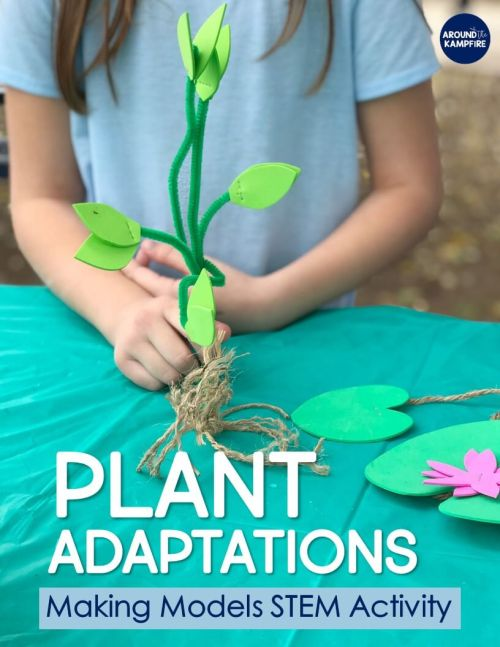small resolution of Plant STEM Activities for Kids: Making Models of Adaptations - Around the  Kampfire