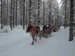 A reindeer sleigh ride through snowy forests at Santa Claus Holiday Village in Rovaniemi, Finland