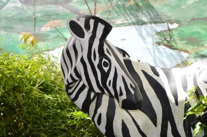 Zebra at Alcorn's Tropical World in Donegal