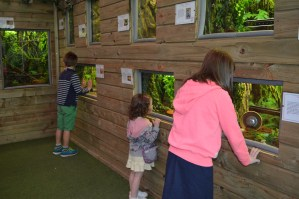 Looking at the creepy crawlies in Bug World at Alcorn's Tropical World, Donegal